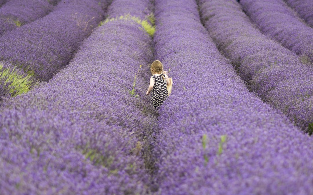 baby on a lavender field