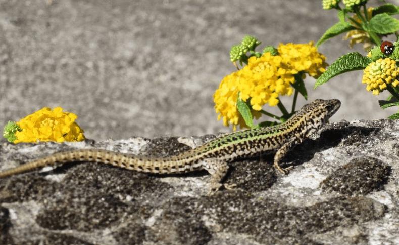 Kids on the Camino – Animal Spotting!